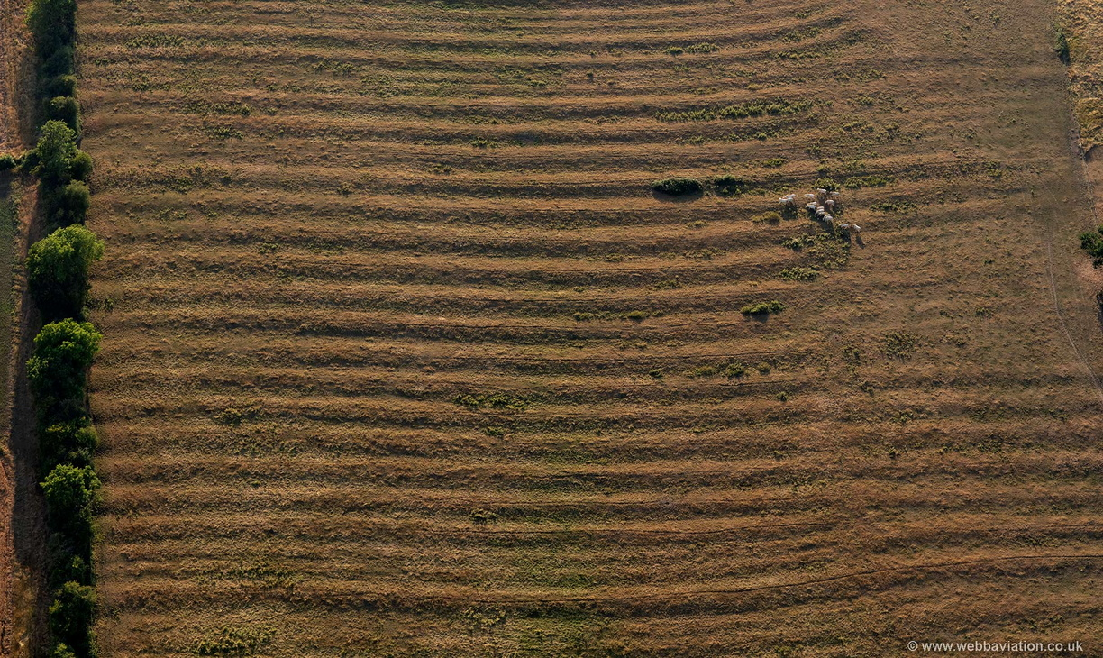 ridge_and_furrow_field_patterns_md15950.jpg