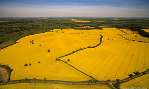 oil seed rape , aka Rapeseed (Brassica napus  ) from the air