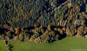 woodland trees on the Llyn Peninsula - Wales from the air